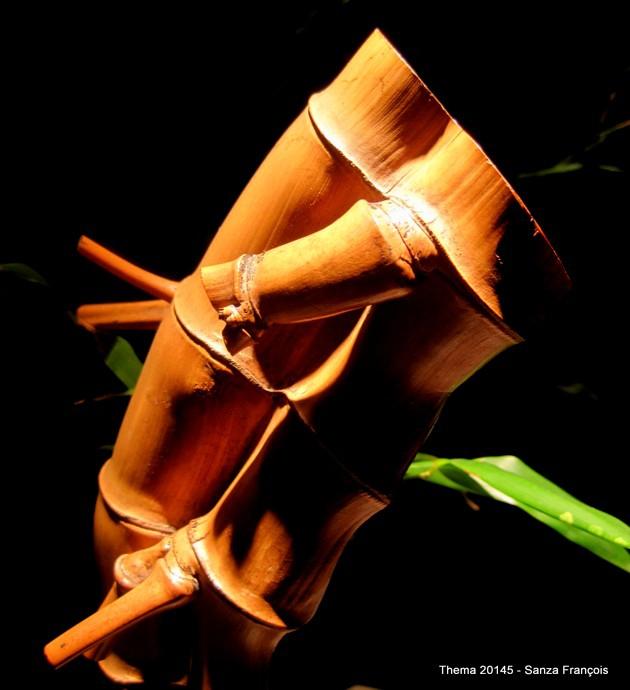 7 bambou (17).JPG